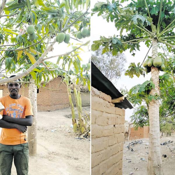 Ein Mann steht unter einem Obstbaum