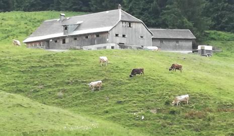 Blick Aus Der Entfernung Auf Die Alpe Bleichten. Davor Stehen Mehrere Rinder Auf Einer Abschüssigen Grünene Wiese.