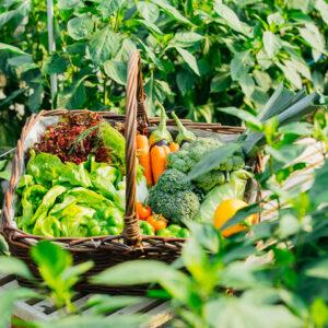 Ländle Gemüse, Foto: Weissengruber