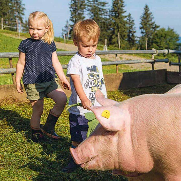 Kinder mit Alpschweinen auf der Alpe Andlis Bringen